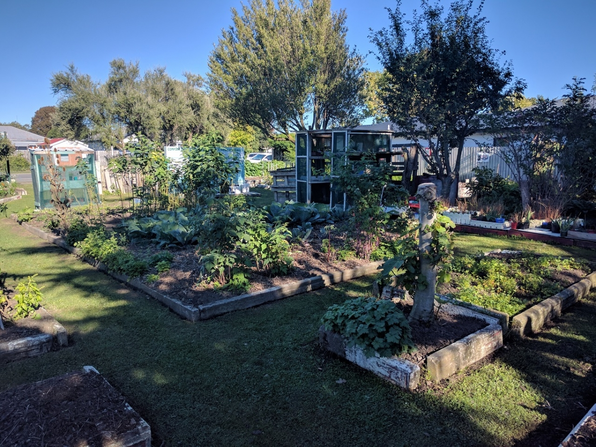 Gallery christchurch south community gardens for Grow landscapes christchurch