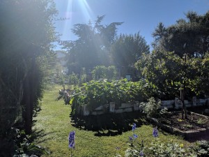 Side view of the garden